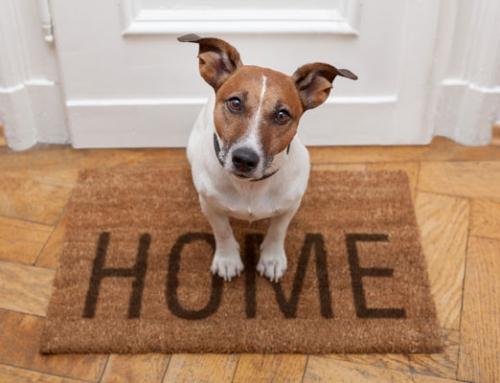 Può il contratto di locazione vietare la presenza di animali?